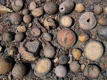 Concretions amassed near Castle Pass