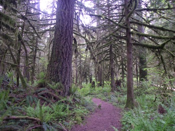 The Seven Sisters Trail near Cultus Lake passes through excellent old growth forest
