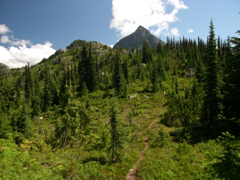 The meadows along the Williams Ridge Trail with Williams Peak looming above