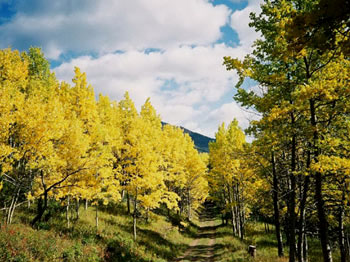 The aspen meadows along the Relay Creek Road in autumn are spectacular